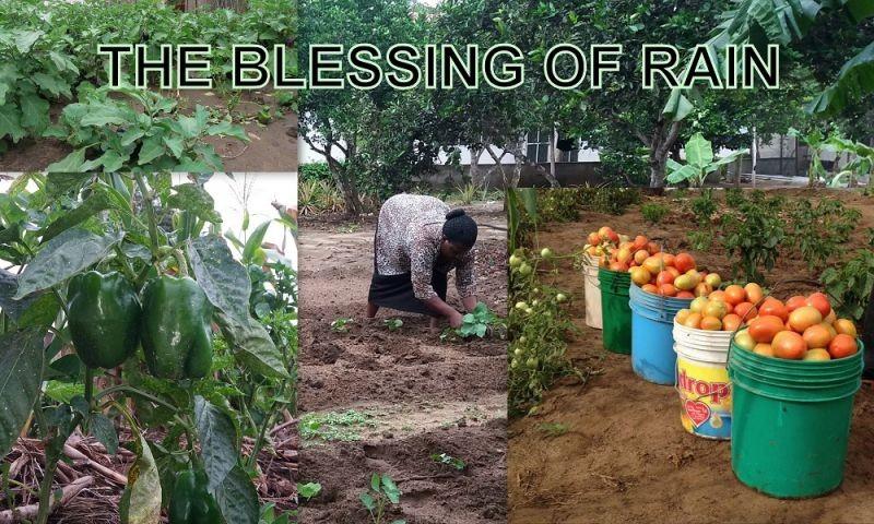African Rains